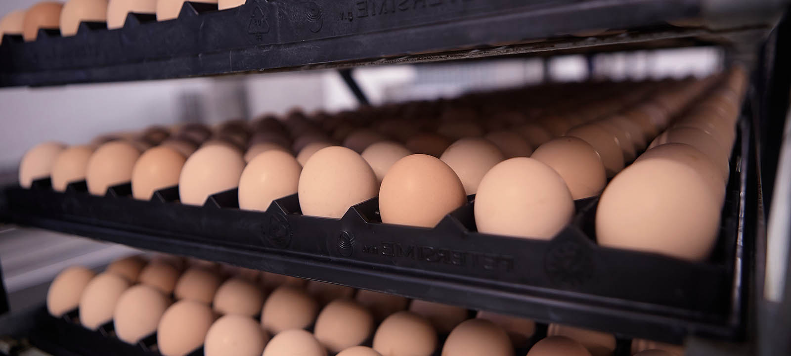 Export of eggs